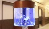 円柱水槽のレンタル・リース料金