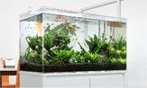 淡水熱帯魚水槽のレンタル・リースの料金