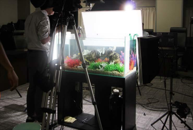 熱帯魚水槽短期レンタルサービス