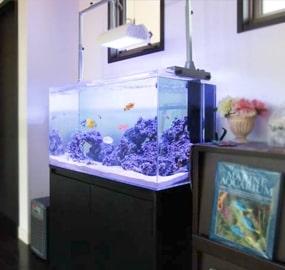 自宅・個人宅に設置した水槽