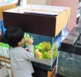 学校・幼稚園・教育機関に設置した水槽