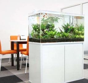 企業・オフィスに設置した水槽