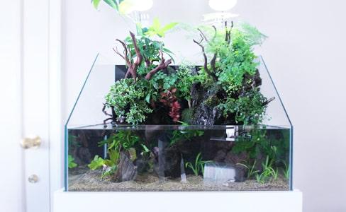 大阪 淡水魚水槽の設置事例