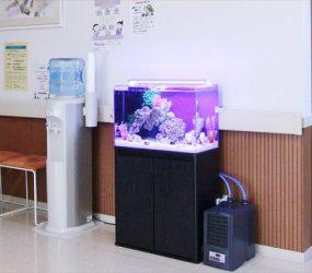 60㎝海水水槽が癒しの空間を演出!サムネイル画像