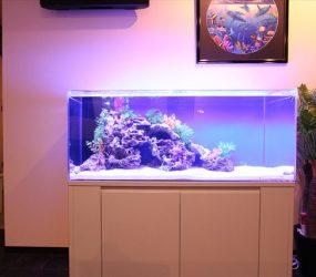美しいサンゴ礁を再現してみましたサムネイル画像