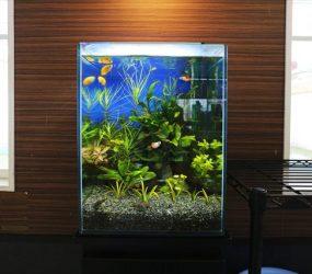 淡水魚水槽 30cm まるで森林!緑いっぱいの小型水槽!サムネイル画像