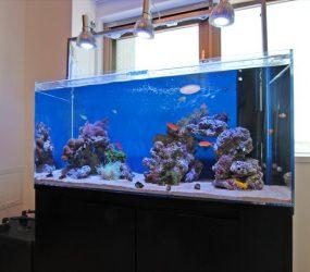海水魚水槽 120㎝ 個人宅様リビング  サムネイル画像