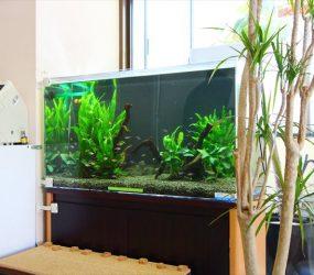 淡水魚水槽 90cm 皮膚科様サムネイル画像