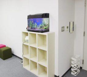 オフィスを彩る 60㎝淡水魚水槽サムネイル画像