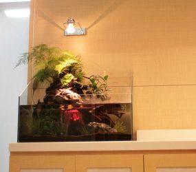 動きを出せる斬新なデザイン水槽ですサムネイル画像
