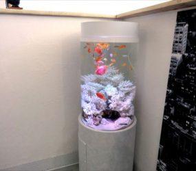 熱帯魚の色彩が映える円柱水槽!サムネイル画像