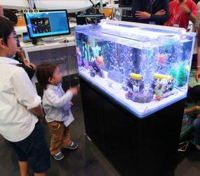 子供たちに大人気!インパクトのある展示水槽サムネイル画像