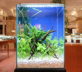 短期イベントに水草の癒しをサムネイル画像