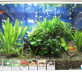 園児たちに大人気の楽しい水槽です!サムネイル画像
