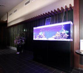 イベントにもピッタリ お魚達がお出迎えサムネイル画像
