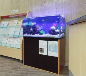証券会社様 待合室に明るいシクリッド水槽サムネイル画像