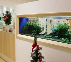 淡水魚水槽 120cm壁面水槽 大阪府 小児歯科医院様サムネイル画像