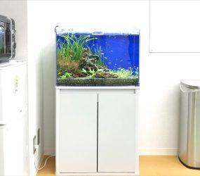 淡水魚水槽 60cm 大阪市 企業様サムネイル画像