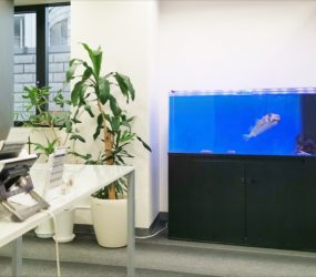 120cm 海水魚水槽 企業様サムネイル画像