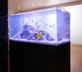 ストーリーに華を添える!90cm海水魚水槽を撮影レンタルサムネイル画像