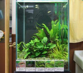 介護施設に設置した癒しの30cm水草水槽サムネイル画像