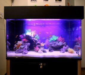子供たちも興味津々!明るい海水魚水槽!サムネイル画像