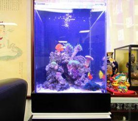 華やかなサンゴと熱帯魚が癒しをお届けしますサムネイル画像
