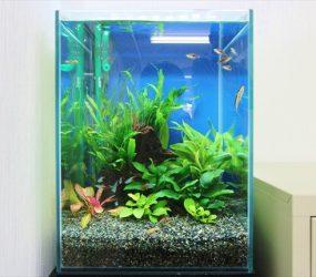ボリューム感のあるインテリア水草水槽サムネイル画像