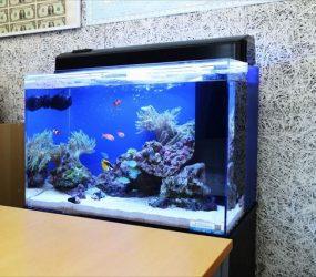 海水魚水槽 60cm 和泉南郡 企業様サムネイル画像
