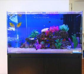 複雑な岩山を南洋の魚たちが泳ぎます!サムネイル画像