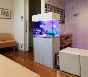 海水魚水槽 60cm 大阪府堺市 歯科様サムネイル画像