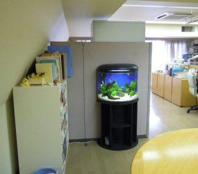 オフィスに癒しを運ぶ 60㎝半円形淡水水槽サムネイル画像