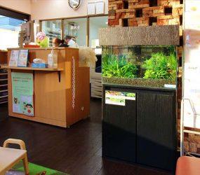 淡水魚水槽 60cm 枚方市 薬局様サムネイル画像
