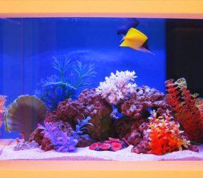 リゾート気分を味わう、美しい南国水槽!サムネイル画像