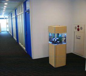 カクレクマノミと遊べる空間をご提供させて頂きました。サムネイル画像