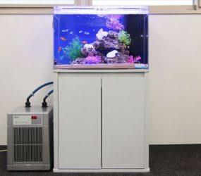 オフィスが華やぐ!60㎝海水水槽サムネイル画像