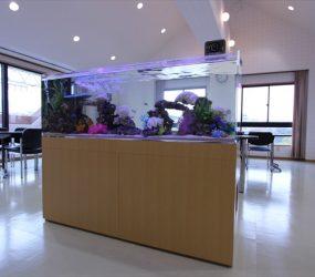 海水魚 150cm 京都府 京都市 企業様サムネイル画像