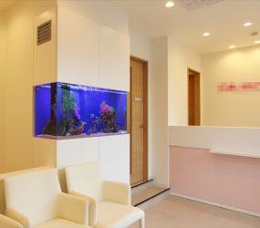 歯科クリニックの待合室に大型海水水槽が登場!サムネイル画像