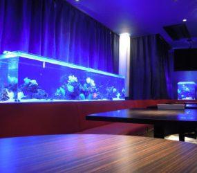 豪華絢爛!飲食店内に設置した3台の大型水槽をご紹介!サムネイル画像