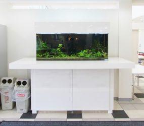 美しい水槽は、お客様にいい印象を与えます!サムネイル画像