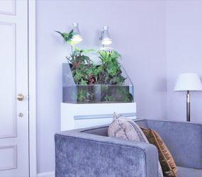 ホテルに設置した緑豊かな60㎝アクアテラリウムをご紹介サムネイル画像
