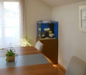 海水魚水槽 45㎝ 個人宅様 サムネイル画像