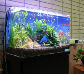 淡水魚水槽 60cm 大阪市 阿倍野区 マンション様サムネイル画像