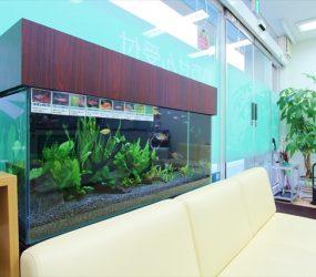 きれいな水槽で清潔感を演出していますサムネイル画像