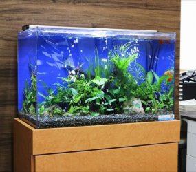 淡水魚水槽 60cm 京都市 企業様サムネイル画像