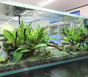 滋賀県 オフィス事務所 120cm淡水魚水槽サムネイル画像