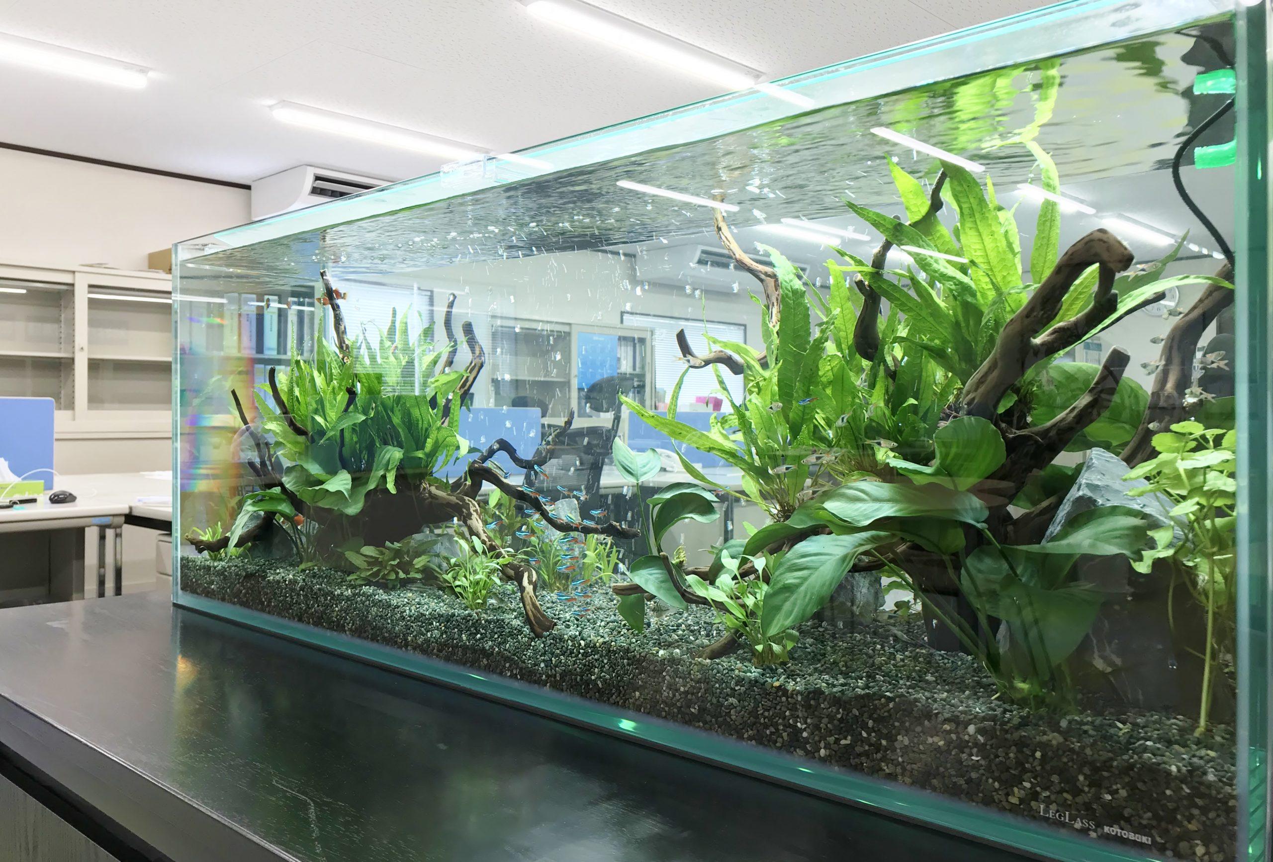 オフィス事務所 120cm淡水魚水槽 水槽アップ画像