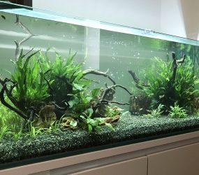120cm淡水魚水槽 大阪市 モデルルームサムネイル画像