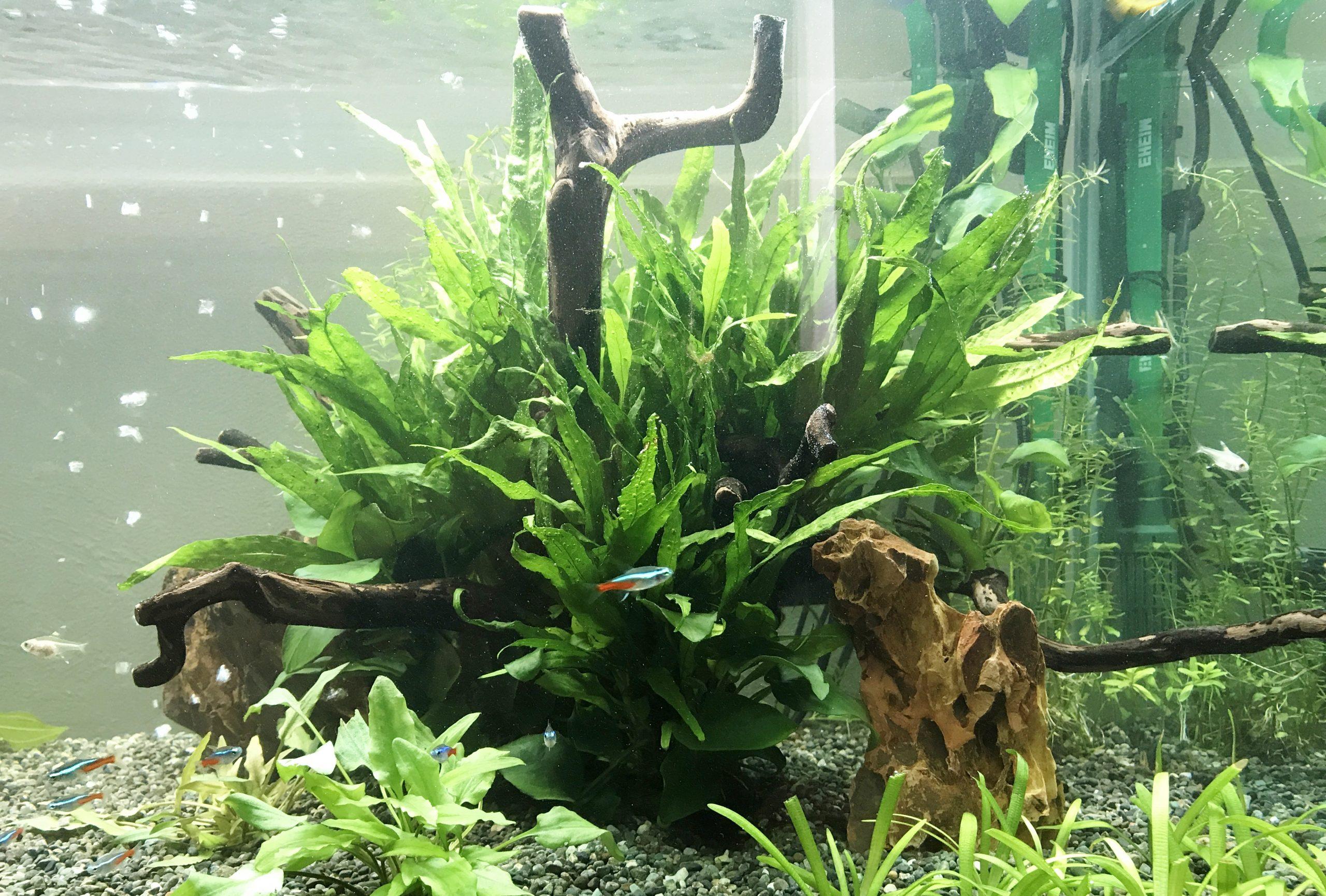 モデルルーム 120cm淡水魚水槽 アップ画像