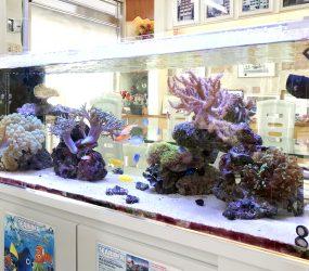 120cmサンゴ水槽 大阪市不動産事務所サムネイル画像
